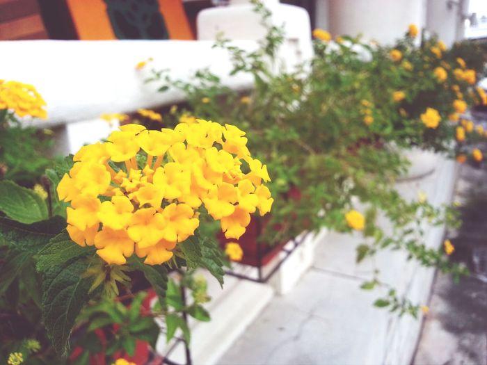 Flowers#nature#hangingout#takingphotos#colors#hello Worldflorafauna F