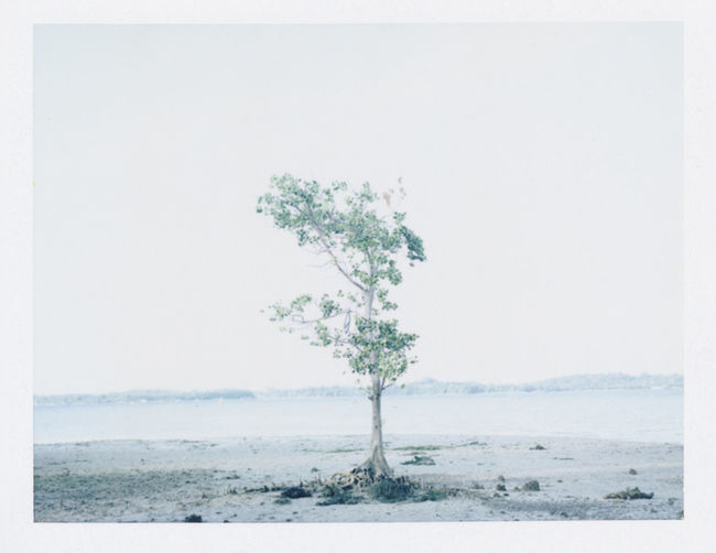 Whispering Shores. Showcase: January Beach Shore Sea Tree Nature Instant Film Polaroid Fp100c Singapore ASIA The Week On Eyem