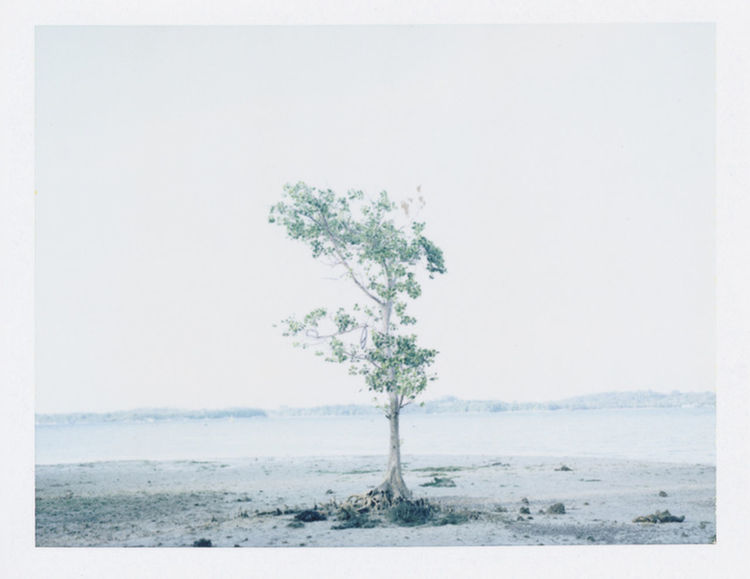 Whispering Shores. Showcase: January Beach Shore Sea Tree Nature Instant Film Polaroid Fp100c Singapore ASIA The Week On Eyem