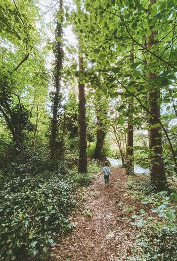 Rear view of person walking amidst trees in forest