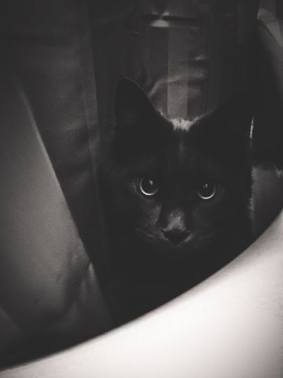 The Bathtub Monster Cat Cat♡ Cats EE_Daily: Black And White Animal Photography Animal_collection Animals Animal EyeEm Animal Lover EyeEm Best Shots Eye4photography  Blackandwhite Light And Shadow EyeEmBestPics Monochrome Bathtub Monster Ozzy Ozzome Love