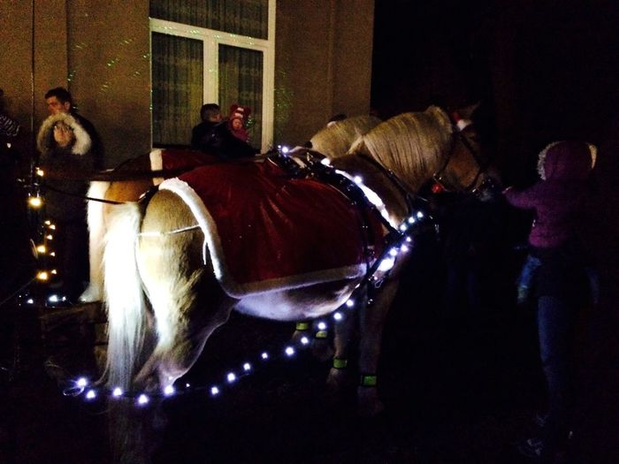 Santa Claus is coming to town with his Reindeers ah no, Xmas Horses