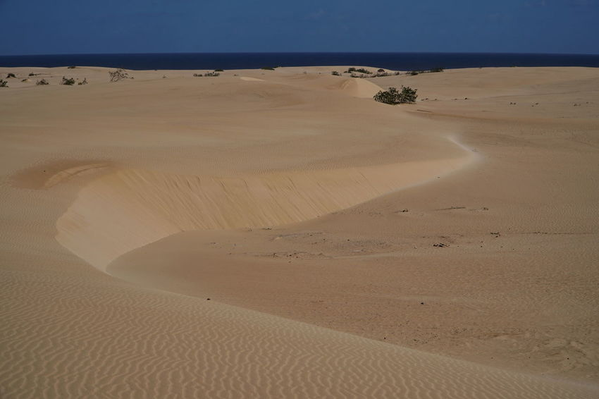 c10 Fuerteventura Arid Climate Beach Beauty In Nature Corralejo, Fuerteventura Day Desert Landscape Nature No People Outdoors Physical Geography Sand Sand Dune Scenics Sky Tranquil Scene Tranquility