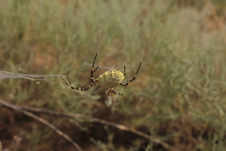 Animals In The Wild Animal Wildlife Animal Themes Animal Invertebrate Close-up One Animal Insect Focus On Foreground Fragility Plant Nature Arachnid Spider No People Day Spider Web Arthropod Animal Body Part Selective Focus Outdoors Animal Leg Web