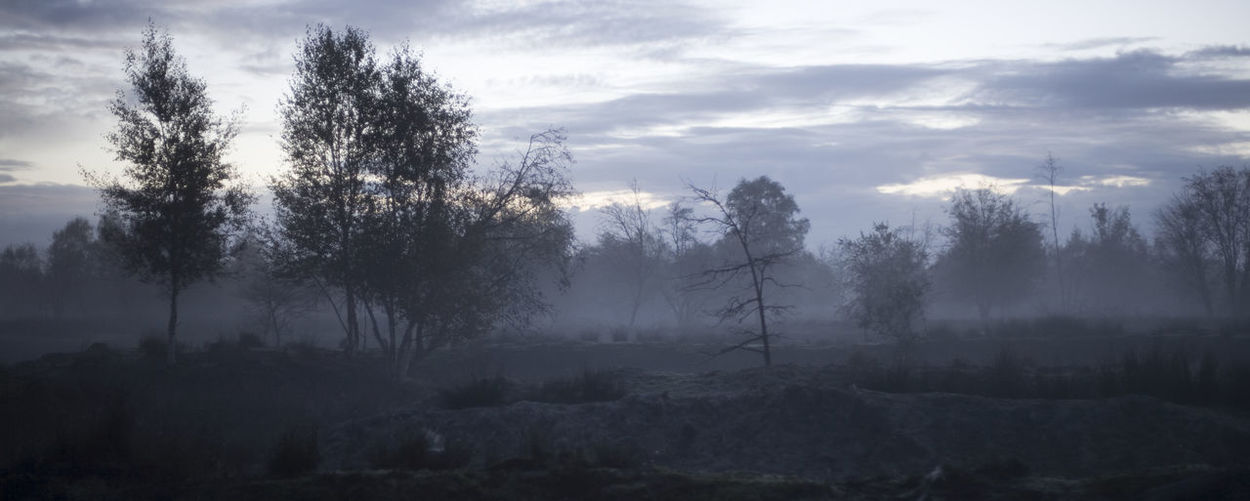 Nature Photography Nature No People Foggy Foggy Morning Foggy Day Spooky Spooky Nature