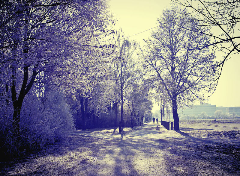 Cold light in winter, rural Bavarian countryside Beauty In Nature Cold Cold Light Couple Day Frost Grey Landscape Nature Outdoors Park Scenics Season  Silhouettes Tranquility Tree Walk Winter