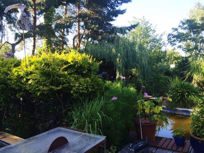 such a Dreamy Fairytale  Garden Sunday