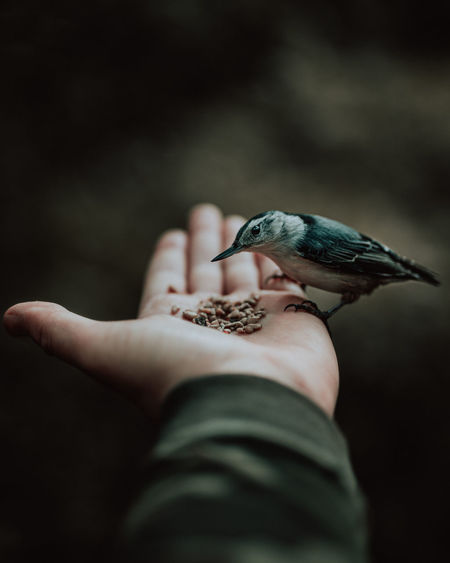 Cropped hand of man feeding bird