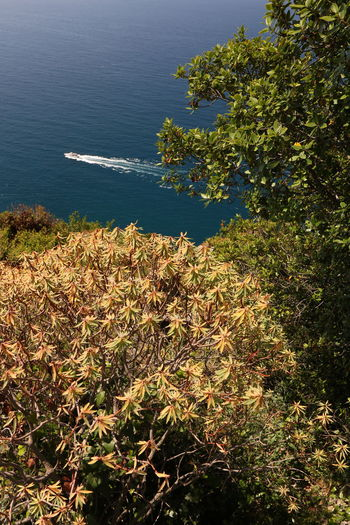 High angle view of plants by sea