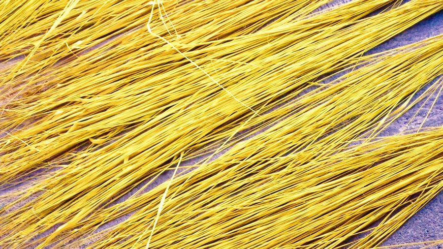 Material für Panamahüte Yellow Backgrounds No People Close-up Indoors  Form Plant Panamahat PanamaHats Panamahut EyeEmNewHere