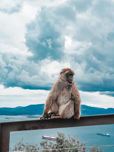 Monkey looking away on sea against sky