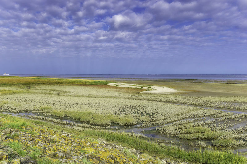 Salt marshes in