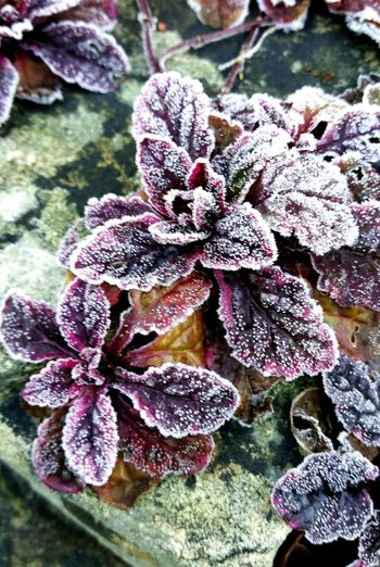 Winter Nature Plant Flower Beauty In Nature Growth Outdoors No People Close-up Day Fragility Water Freshness Flower Head