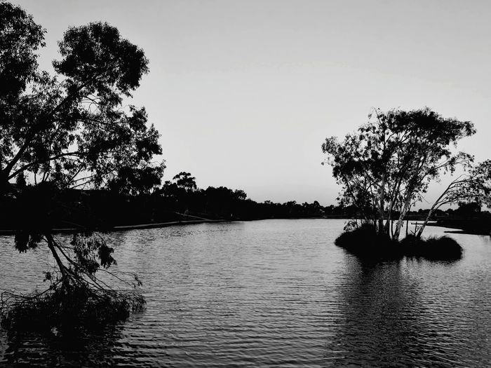 Lakeside Blackandwhite Melbourne Melton Bird Tree Water Flamingo Hippopotamus African Elephant Lake Silhouette Reflection Animal Themes Wetland Aquatic Swimming Animal