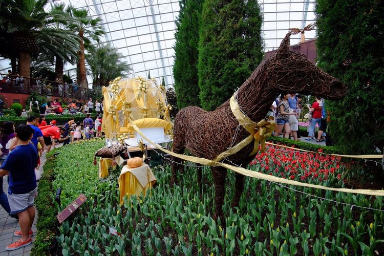 Cinderella carriage at Tulipmania 2015 Singapore Tulips🌷 Tulipmania Cinderella's Carriage Cinderella
