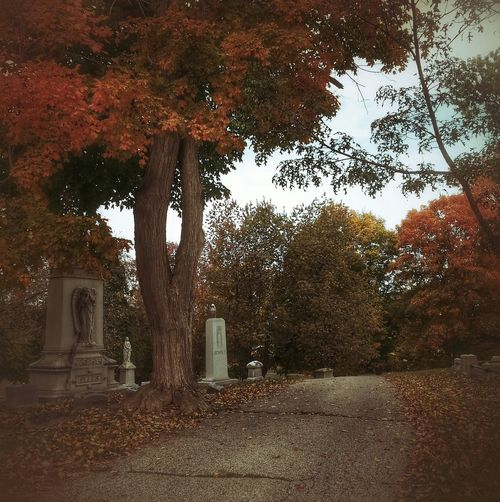 Cemetery_shots