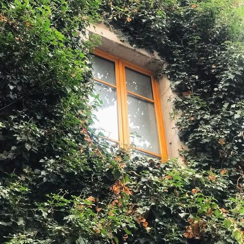 Taken in Annecy, France. A lovely, bright orange window frame against blossoming green leaves. Sunny, bright and eye catching Vacation Vacations Holiday View Window Travel Destinations Blogger Travel Nature Nature Window Leaves🌿 Leaves Annecy, France Annecy French France France Green Color Window Day Growth No People Plant Built Structure Tree Water Architecture Outdoors Nature