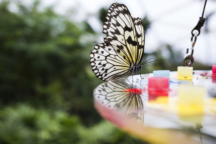 Close-up of butterfly on table