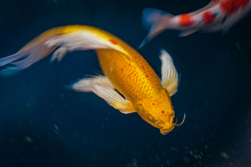 Close-up of fish swimming in sea
