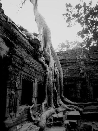 Ta Phrom, Siem