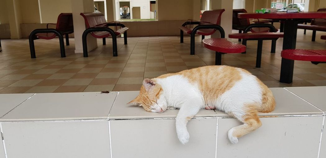 sleeping cat Residential Building Pets Full Length Domestic Cat Lying Down Obedience Animal Hair EyeEmNewHere The Art Of Street Photography