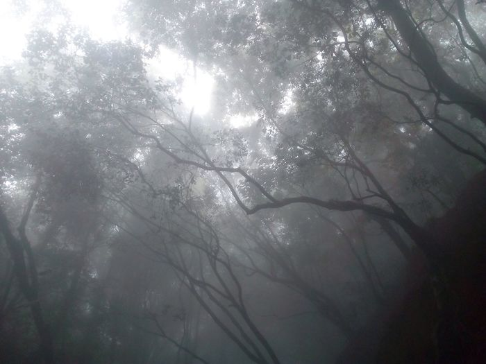 Lost In The Landscape Forest Foggy Morning Trees And Nature Beauty In Nature Natural Light Photography No Edit/no Filter EyeEmNewHere