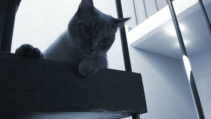 Cat Beautiful ♥ Blue Cute Animals Cute Pets Taking Photos I Love My Cat