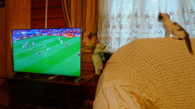 The Euro 2016. My cat is a fan of football ! Cat Cat Lovers Catoftheday Cats Cats Of EyeEm Cat♡ Close Up Cute Cute Cats Cute Pets Cute♡ Euro 2016 Fan Favourite Follower Football Football Fever House Cats Kitty Kitty Cat Match Pet Pets Sport Sport Time