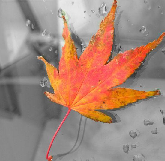 冬がくるー😫 Fall Leaf Yellow Red My Car