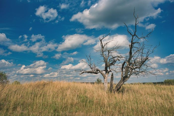 Sky Nature Cloud - Sky Outdoors Plant No People Landscape Rural Scene Day Grass Beauty In Nature Cereal Plant Tree Scenics Deadtree