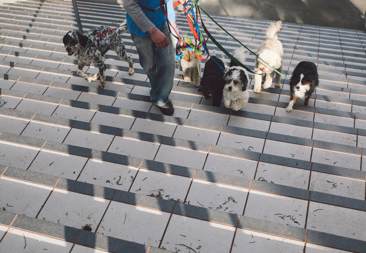 Low section of man walking with dogs at steps
