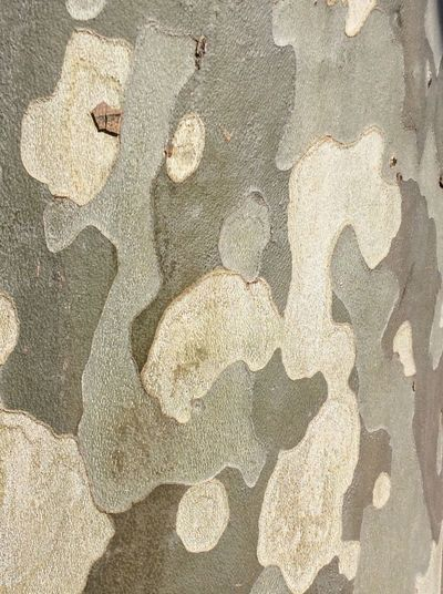 Taking photos at school 🏫 Re Treebark so Lovley  with all the Patterns