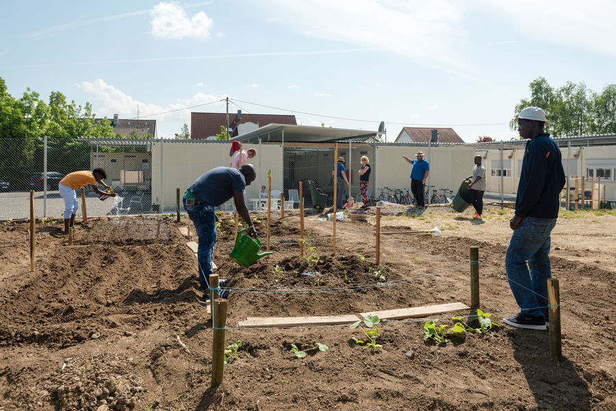 Scharnhausen, Germany - May 26, 2016: German volunteers are supporting African, Arabic and Asian refugees in setting up a small garden behind their refugee camp in Scharnhausen, Germany. Over 1 million refugees arrived in Germany in 2015 alone, integration of these people requires enormous efforts by the government but also by thousands of volunteers supporting the integration of these refugees. Education Gardening Helping Refugees Leisure Activity Lifestyles Nature Outdoors Refugee Refugee Camp Refugeecamp Refugees Refugees Welcome Training Vegetables Vegetables & Fruits Volunteer Volunteering