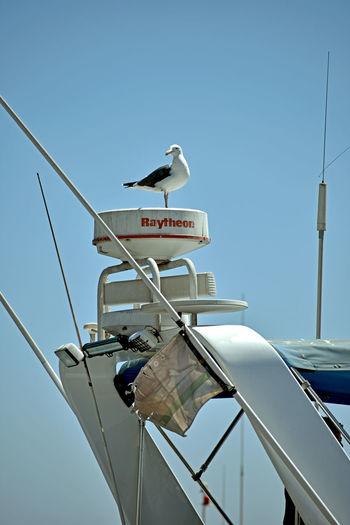 Sky Bird Animal
