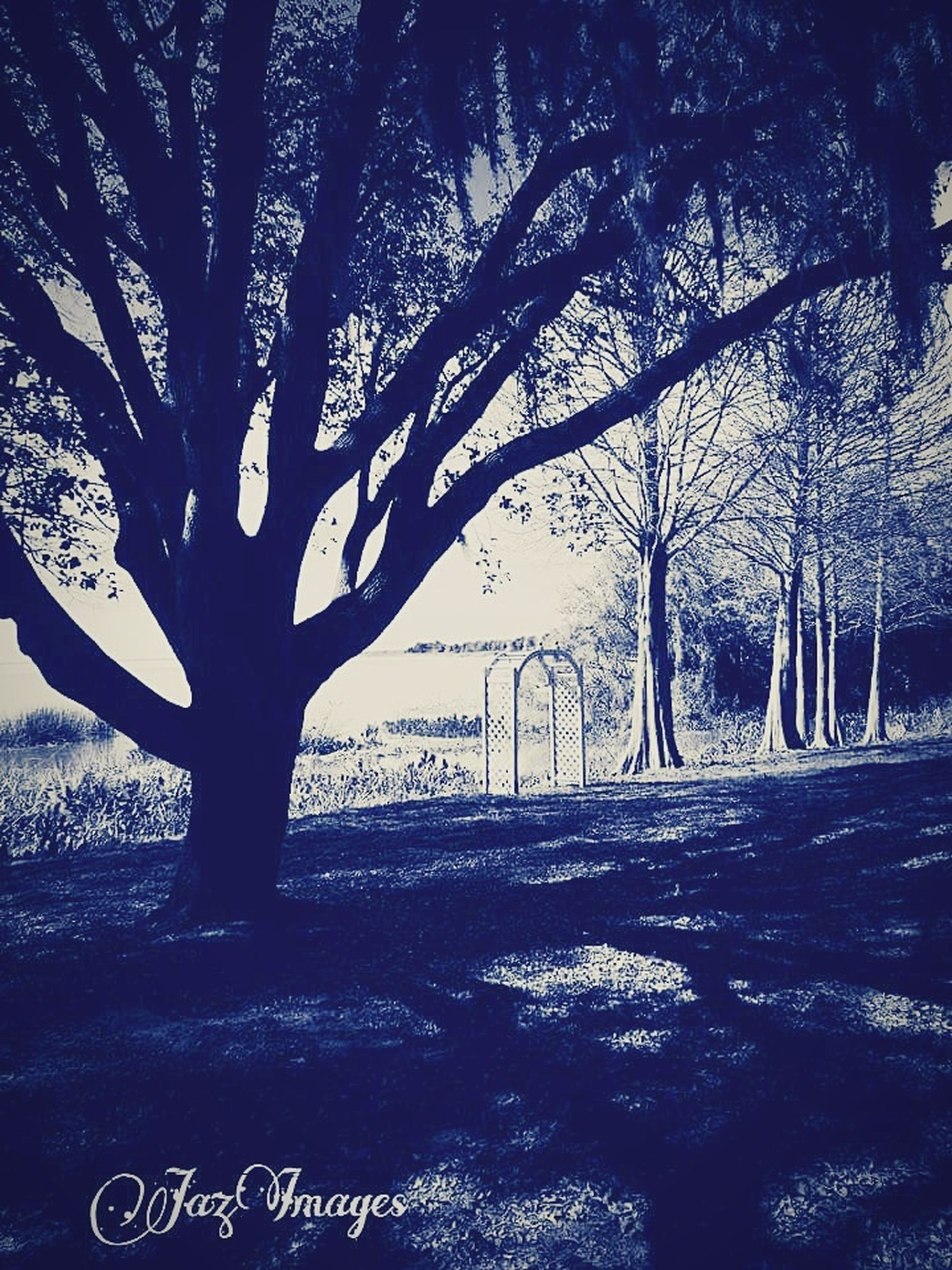 tree, plant, nature, trunk, tree trunk, growth, tranquility, land, scenics - nature, beauty in nature, tranquil scene, field, no people, day, bare tree, environment, branch, landscape, outdoors, shadow