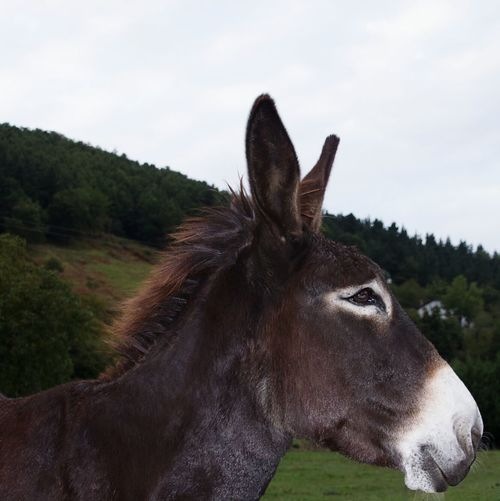 Happy donkey From My Point Of View Closeup Nature Photography Animal Photography Animelover Deceptively Simple