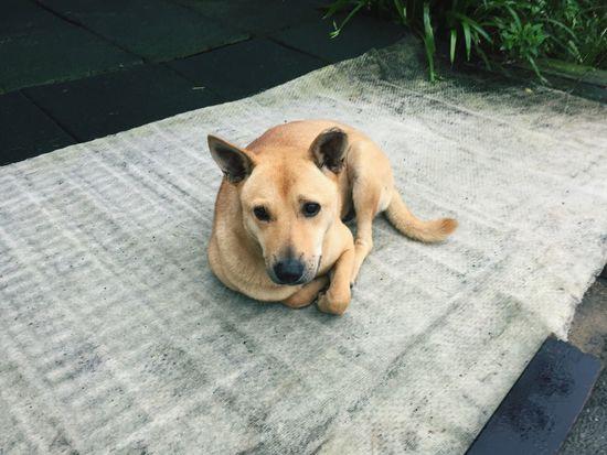 One Animal Dog Canine Domestic Animals Mammal Domestic Animal Lying Down Outdoors