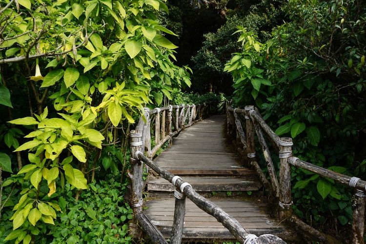 Chaing Mai Green Natural Nature Path Plant Thailand Tree Beauty In Nature Day Foliage Forest Fresh Garden Green Color Growth Landscape Leaf Leaves Nature No People North Outdoors Pathway Plant Tree Walkway Water Way Wood - Material Wooden