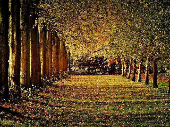 November Park
