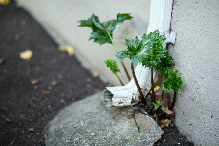 Plant Leaf No People Day Plant Part Nature Growth Close-up Outdoors High Angle View Freshness Green Color Flower White Color Flowering Plant Wall - Building Feature Beauty In Nature Selective Focus Vulnerability  Fragility