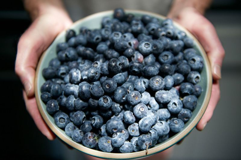 Cropped Image Of Farmer Holding Blueberries In Bowl