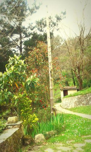 Culebre