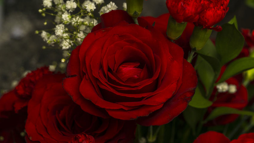 Red Beauty In Nature Bloom Blooming Blossom Bunch Of Flowers Close-up Flower Flower Arrangement Flower Head Flowering Plant Fragility Freshness Growth Inflorescence Nature No People Petal Plant Red Red Rose Rosé Rose - Flower Vulnerability