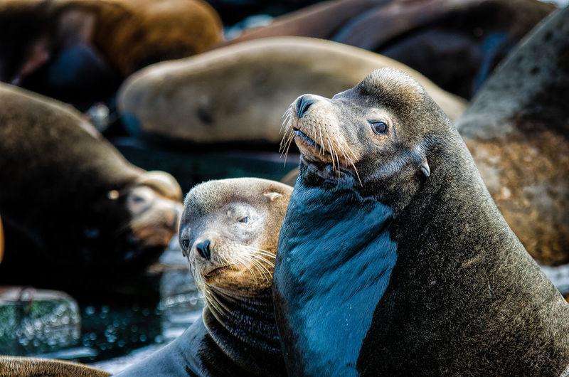 Close-up of seals