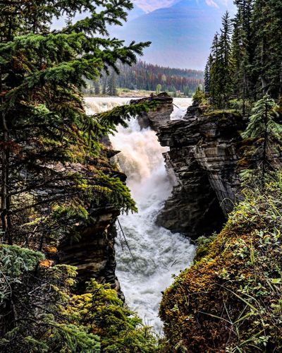 Jasper National Park Athabasca Falls Canada Tree Beauty In Nature Scenics - Nature Water Waterfall Nature Day No People Rock Rock - Object Power In Nature