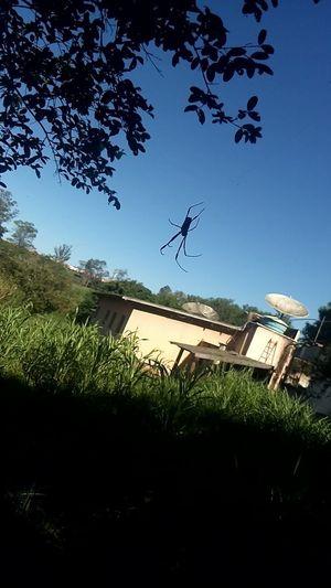 Beautiful Spider ( No Edit, No Filter) !!!!😉😉 EyeEmNewHere !!!!!!