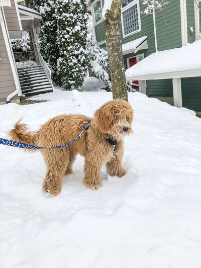 View of dog on snow covered landscape during winter