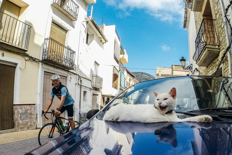 Calpe SPAIN Cycling Cyclist Cycle Cat City Yawn Yawning Cat Bike Biking