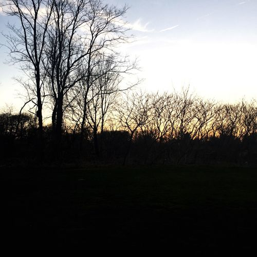 Sunsets⛅️🌇 Tree Sunset Geogeous