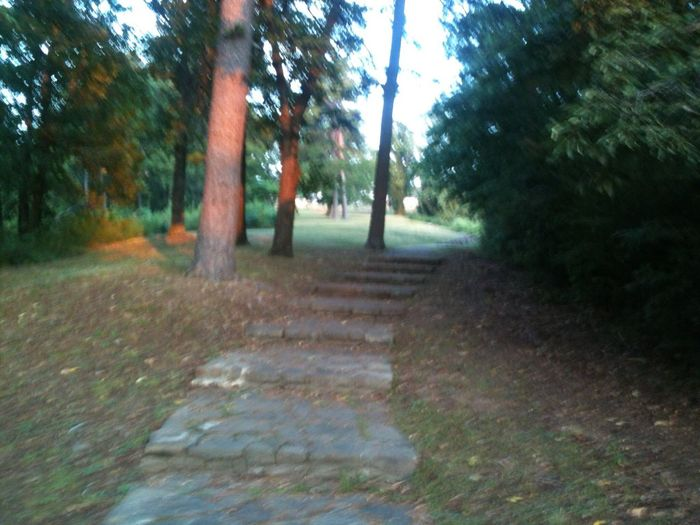 The City Light Tree The Way Forward Nature Outdoors Forest Day Dirt Road Tranquility No People Echo Rock Echo Park  Little Rock, Arkansas